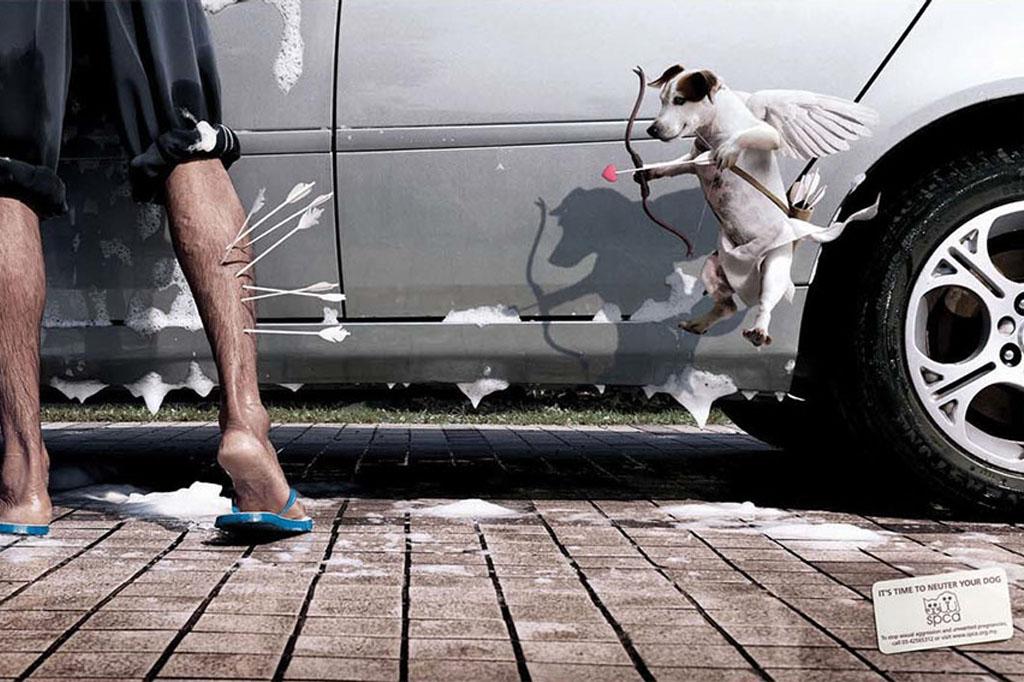 SPCA Neuter Pets Print PSA